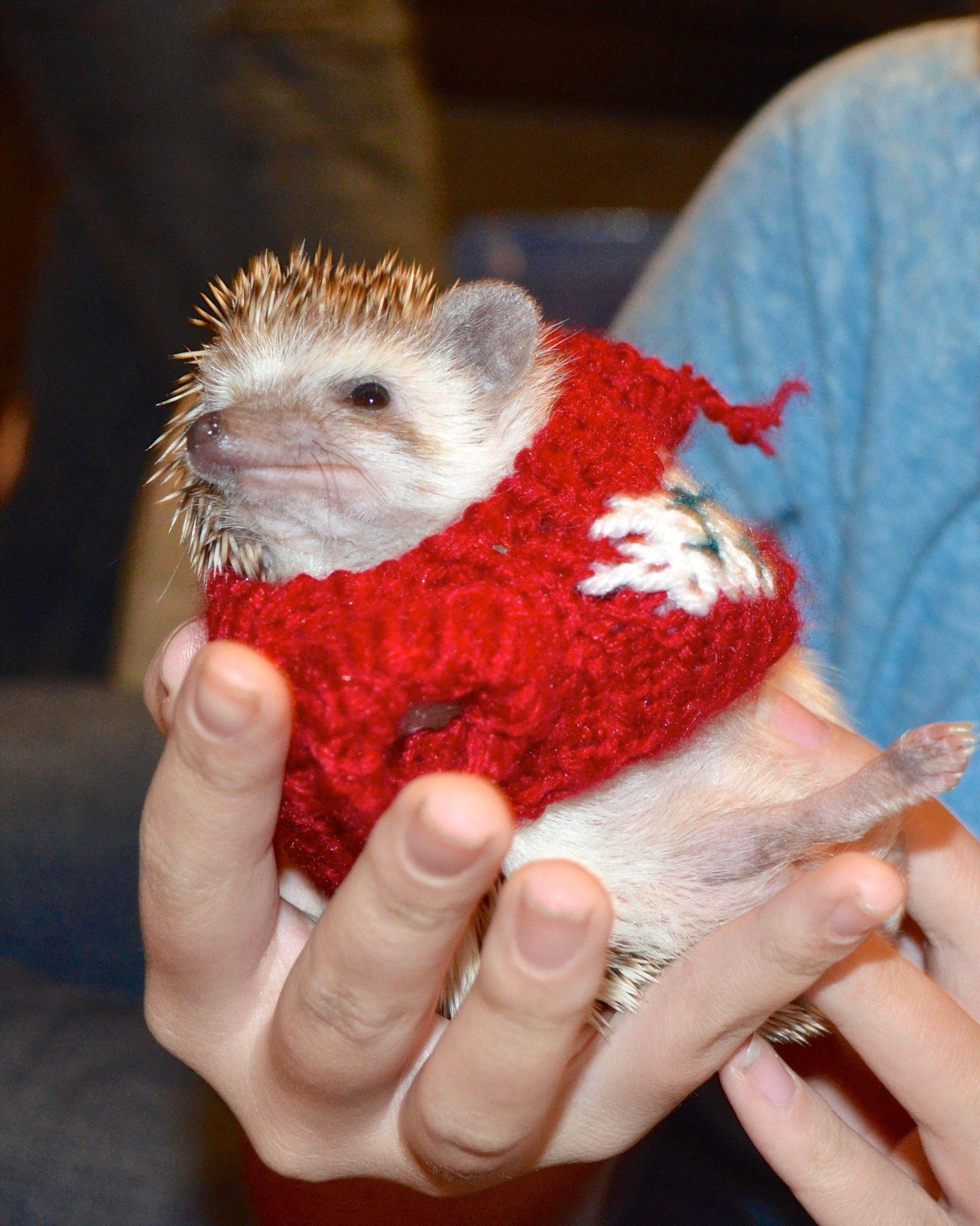 Hedgehog Christmas Jumper.The Christmas Sweater The Pleasantries Of Princess