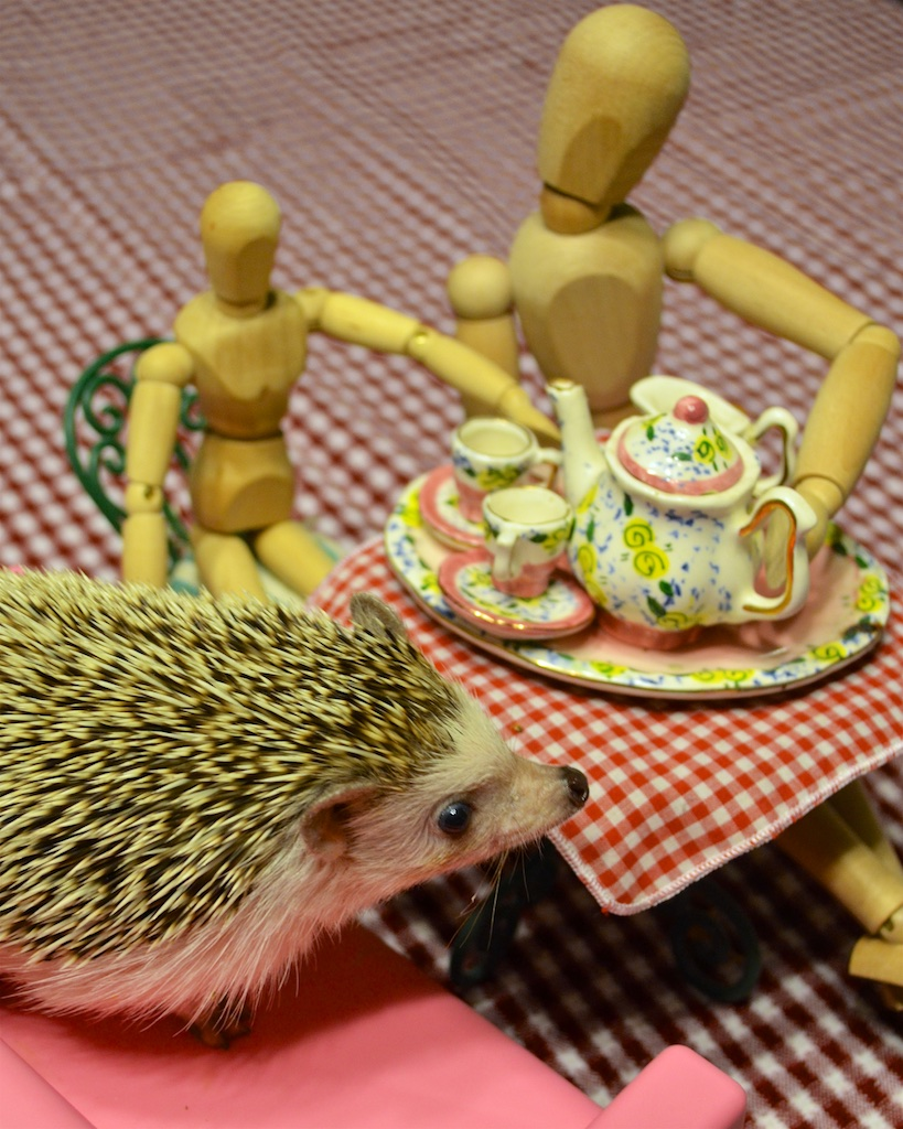 Princess Pricklepants politely hatless at a nice tea party.