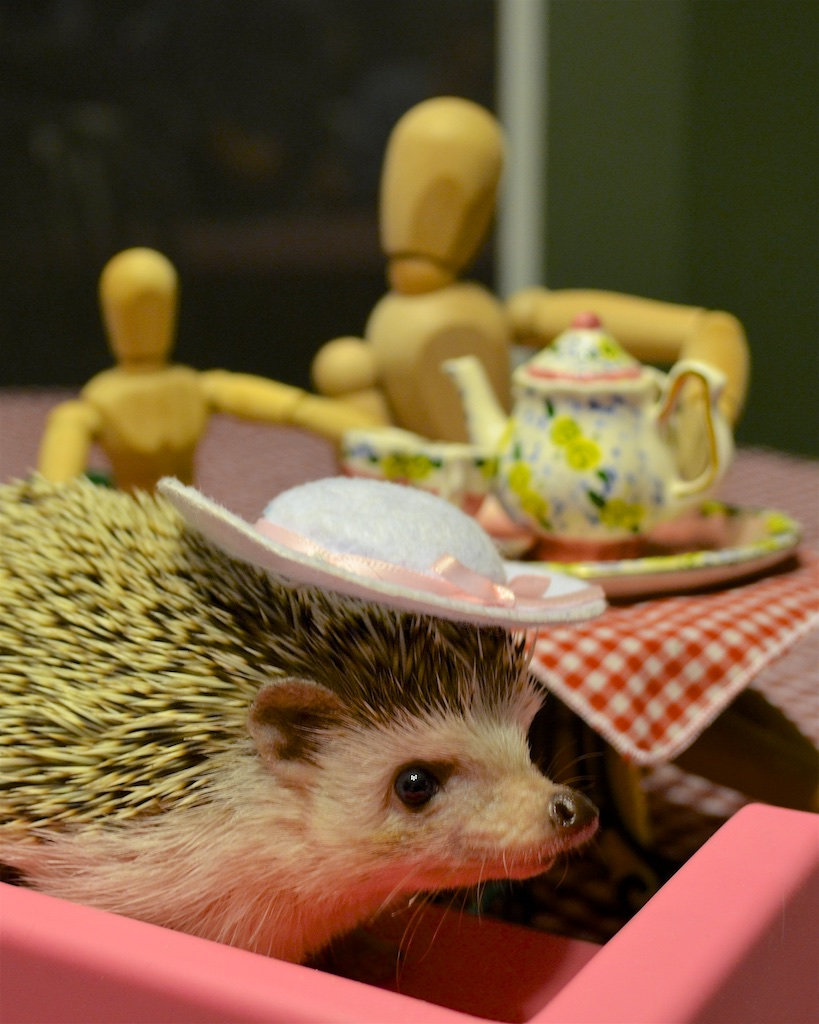 Princess Pricklepants wearing a nice hat at her tea party.