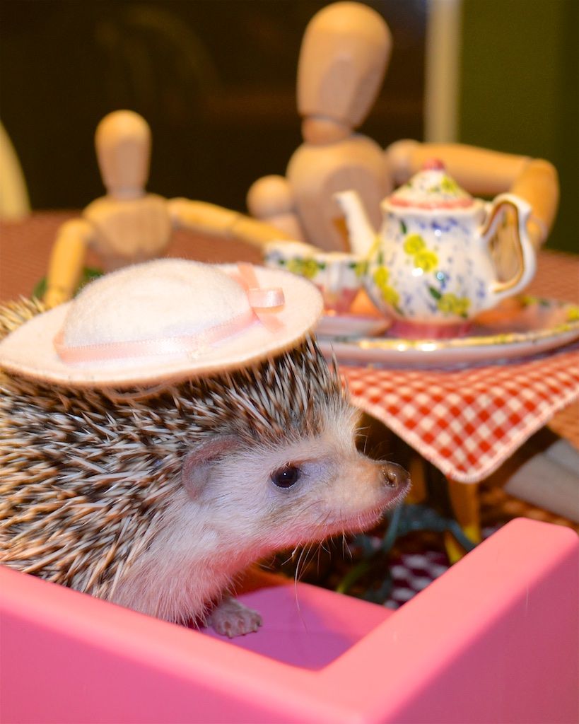 Hedgehog sitting on couch at tea party, wearing hat.