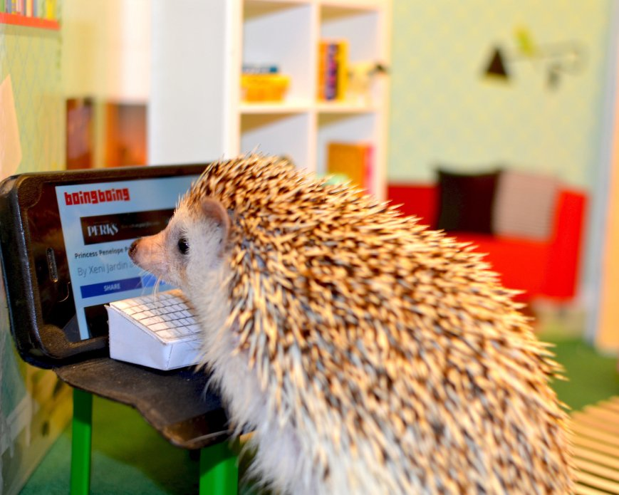 hedgehog reading boingboing