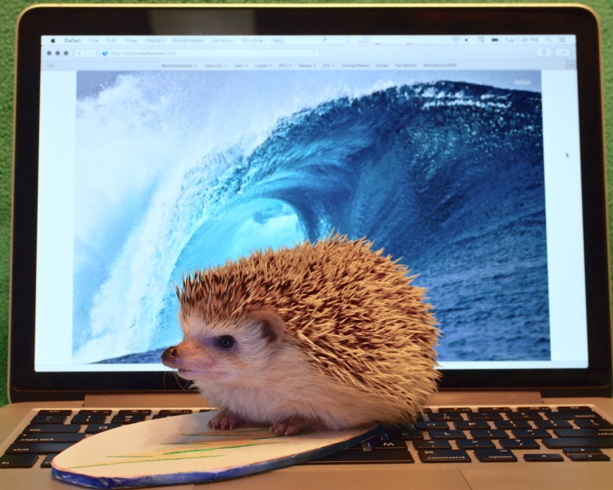 surfintheweb