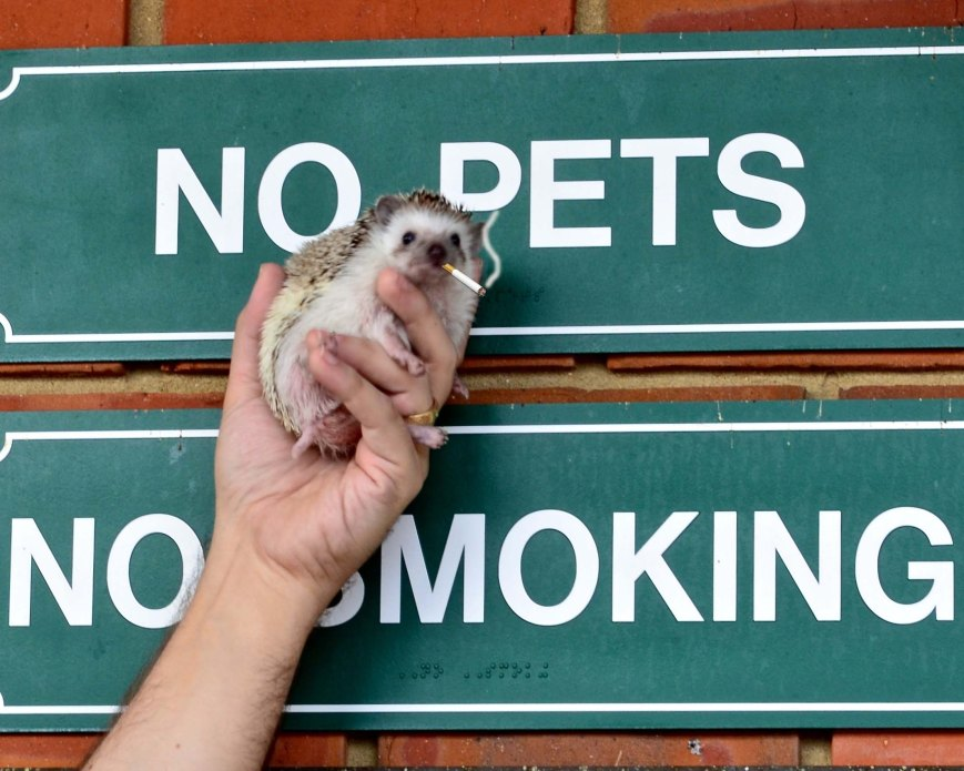 No Pets! – Version 2