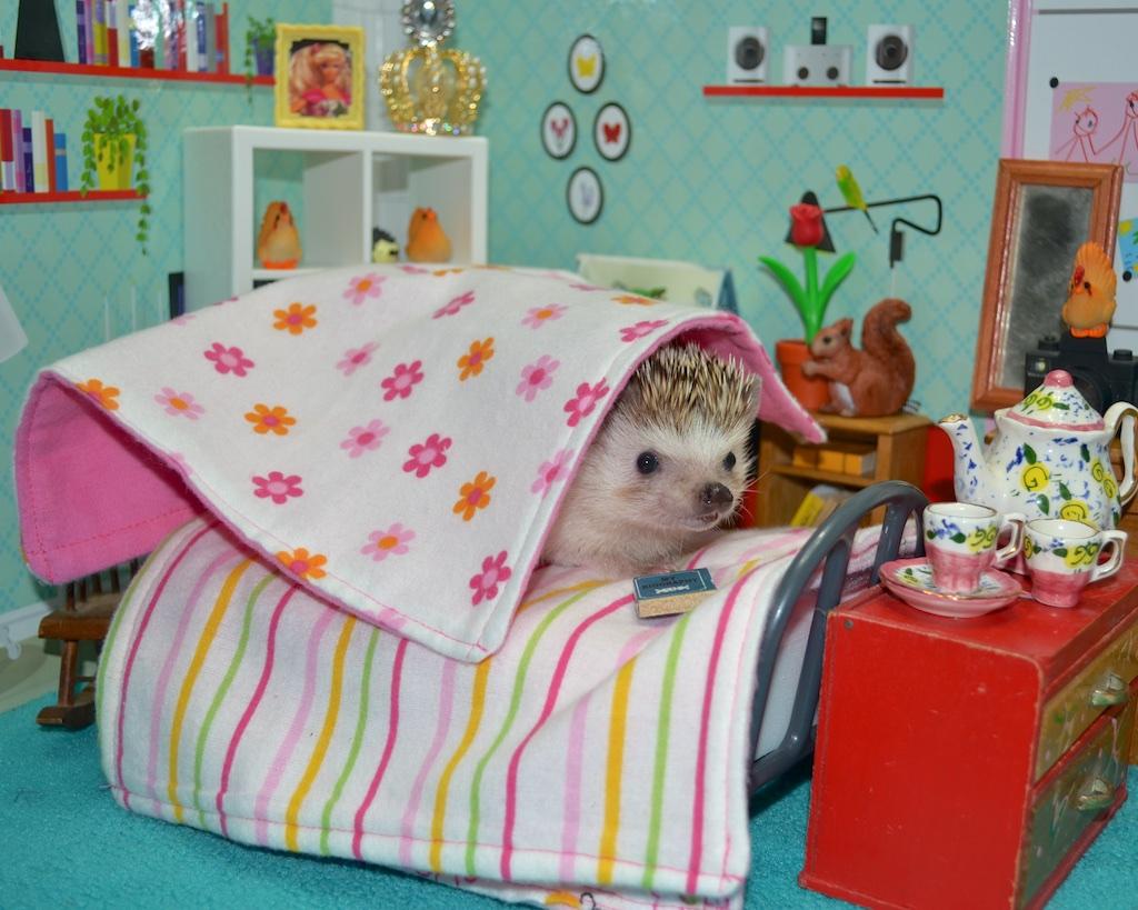 hedgehog bedtime reading