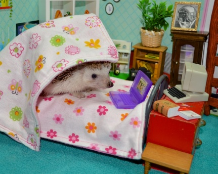 The Quiet Place, Hedgehog in bed with laptop.