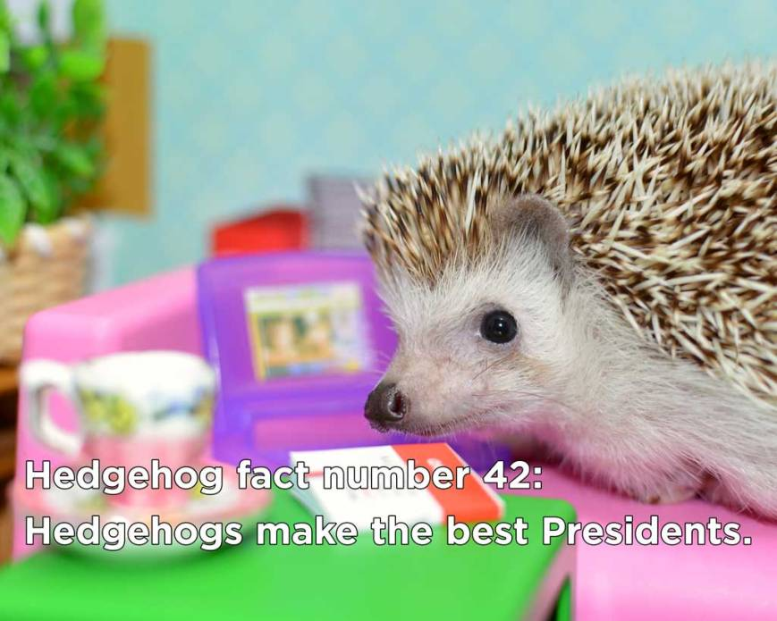 hedgehog_fact