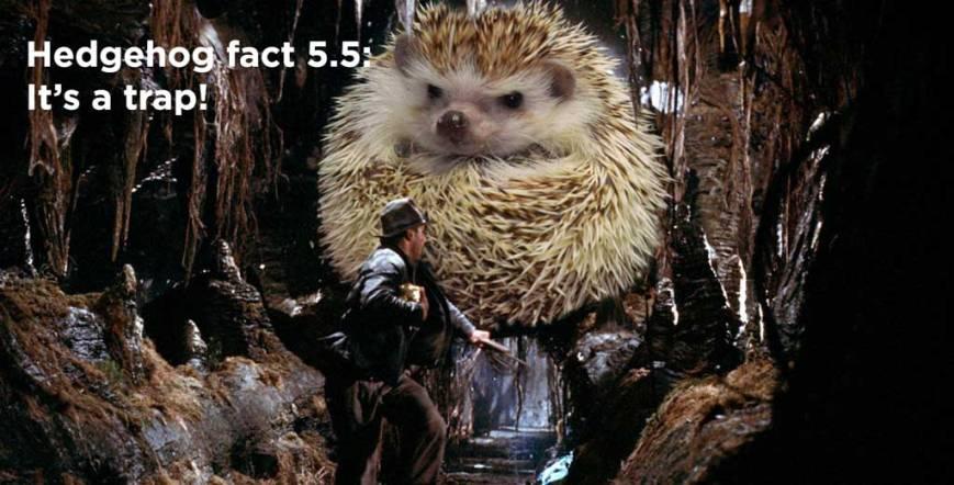 hh_fact19