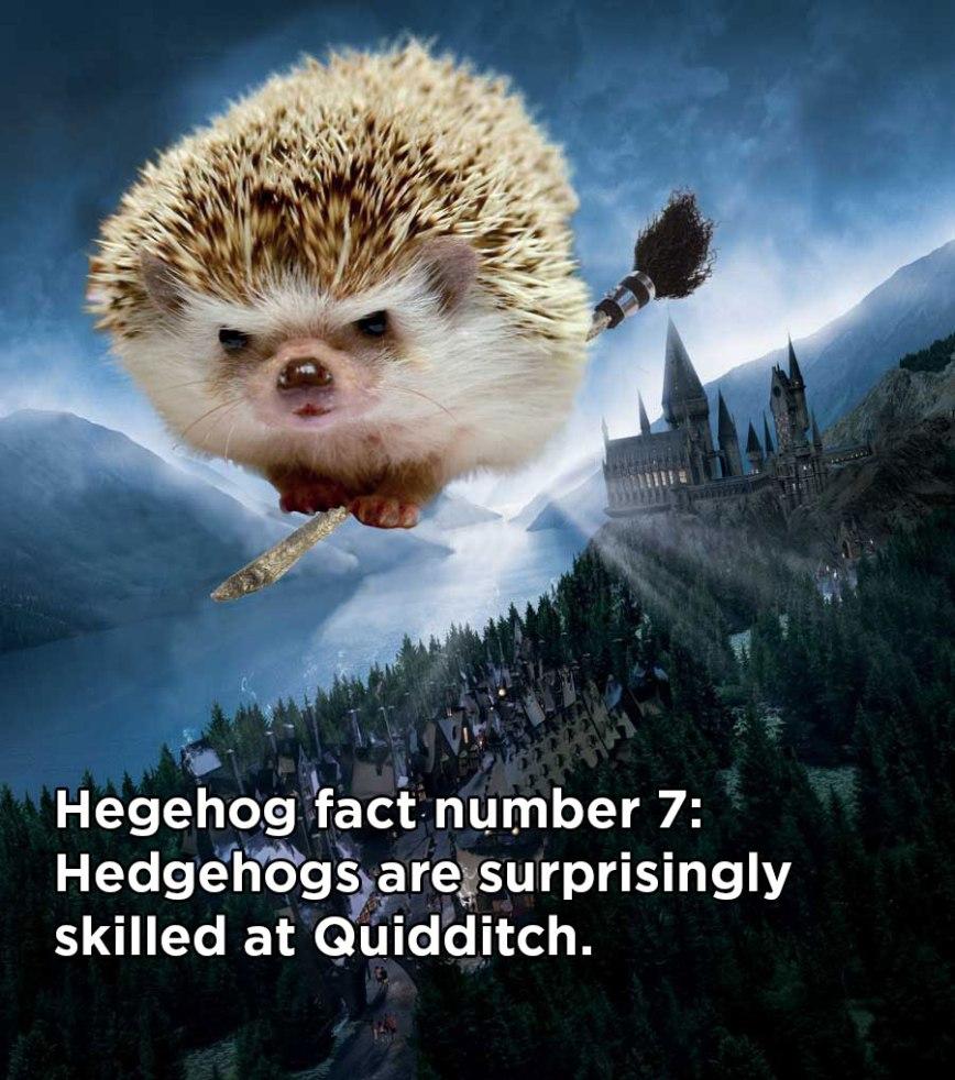 hh_fact5