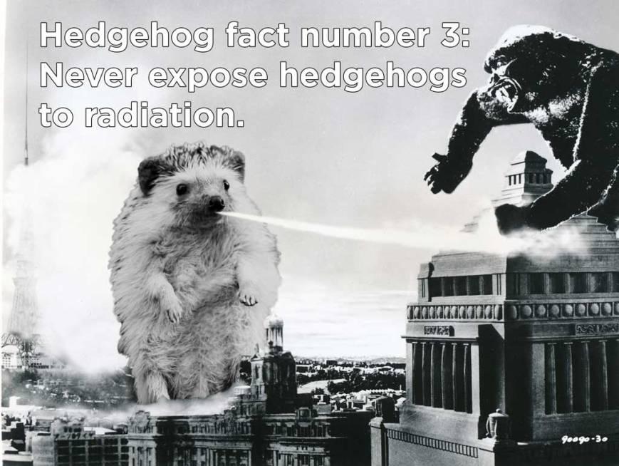 hh_fact8
