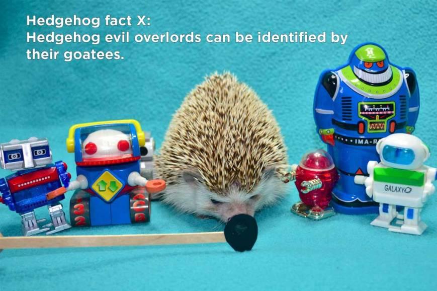 hh_fact32