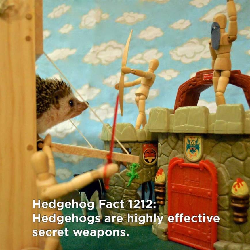 hh_fact62
