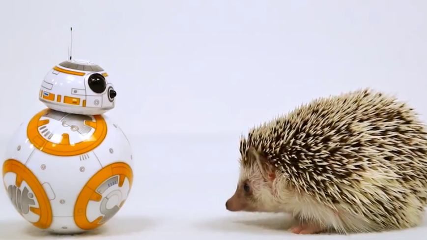 bb-8-star-wars-force-awakens.png