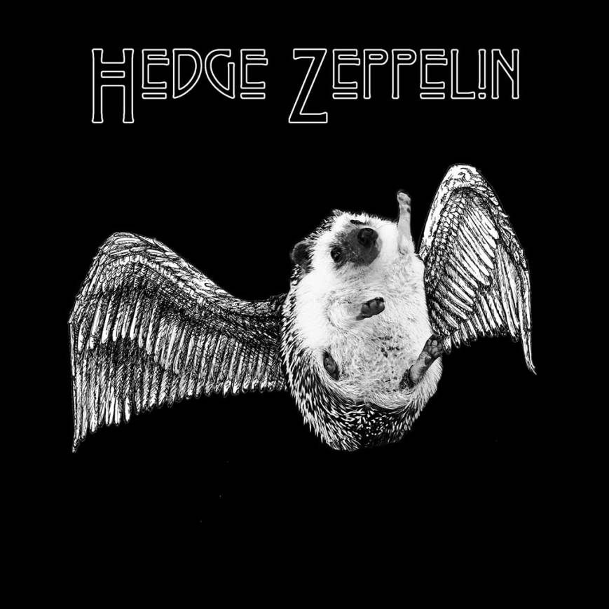 hedge-zeppelin-album