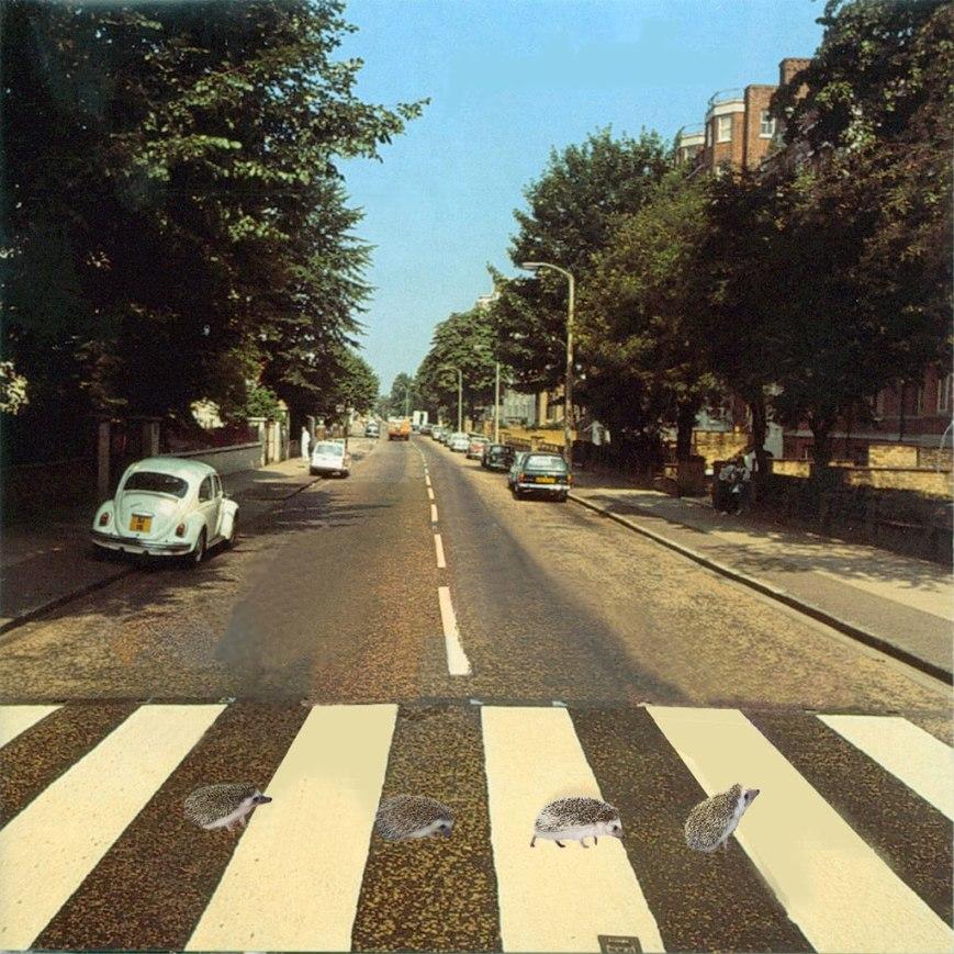 hedgie-road