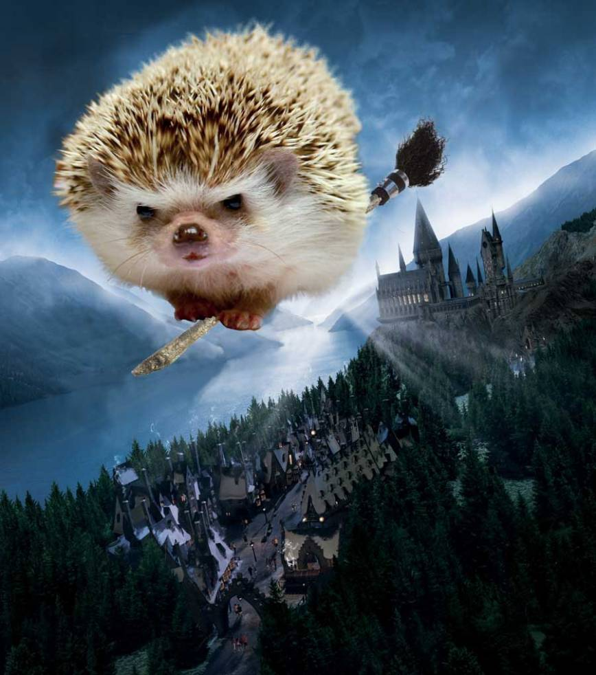 Pricess-Potter-Flying