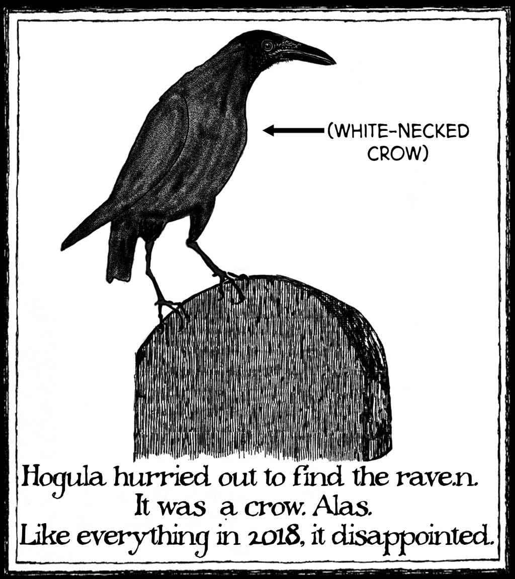 hogula-crow